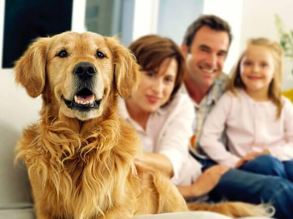 Adiestramiento Canino en Bogotá