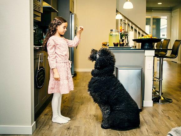 Obediencia canina en Bogotá