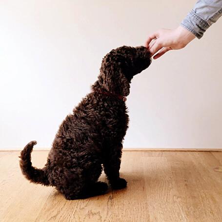 Captar la atención del perro
