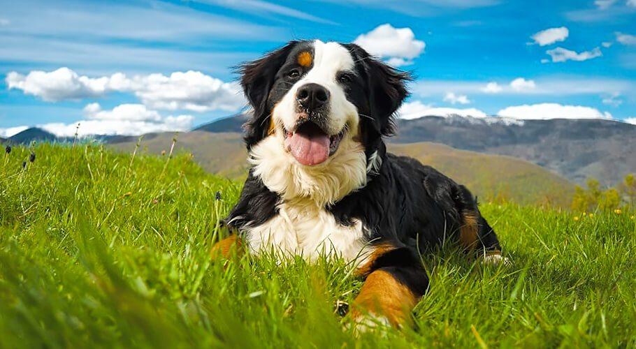 Enseñar a mi perro a echarse