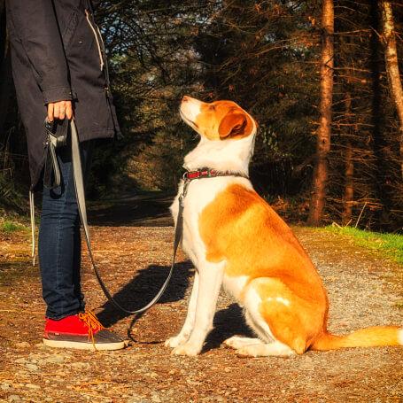 Pasos para cargar el clicker con tu perro