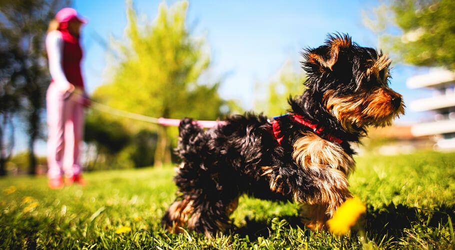 Tipos de correas y collares para perros