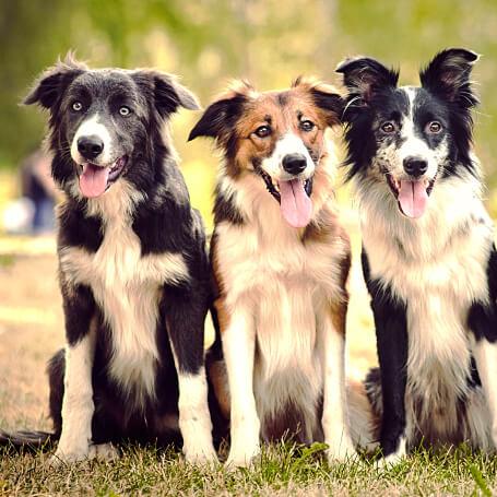 Guarderías Caninas recomendadas en Bogotá