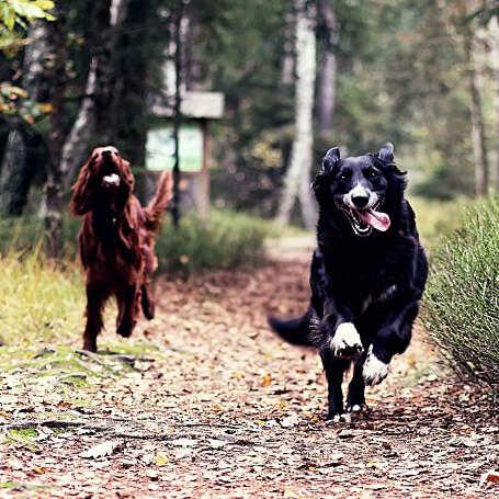 Recomendaciones sobre guarderias caninas