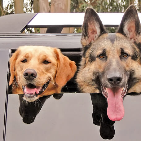 Transporte de guarderías caninas