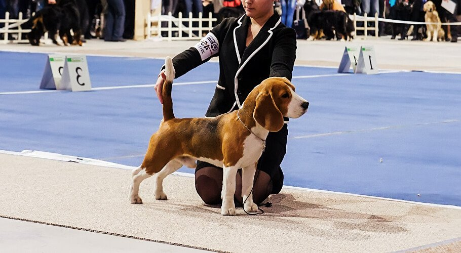 Asociación Club Canino Colombiano, ACCC