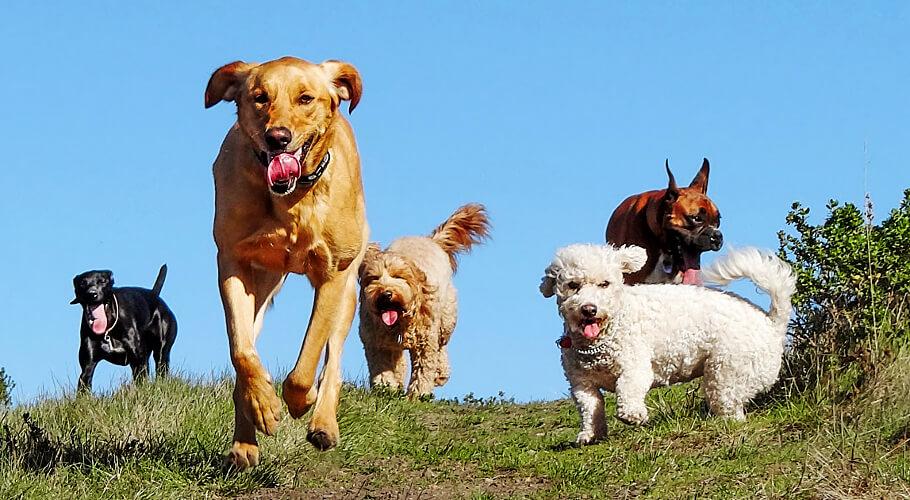 Guarderías Caninas en Bogotá