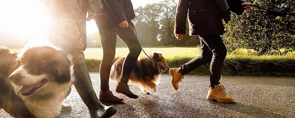 Quienes somos Adiestramiento Caninos