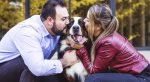 20 Consejos para empezar el adiestramiento canino (Video)