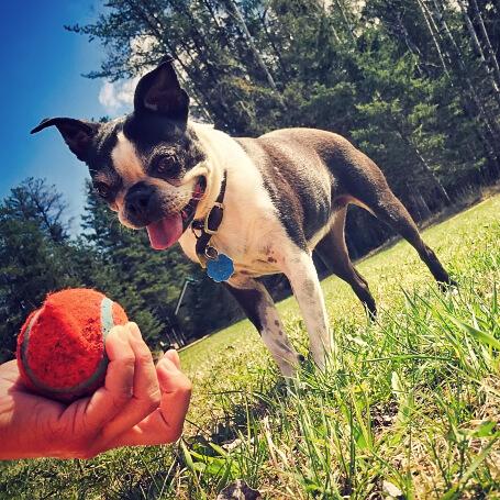 Dueño jugando con su perro y la bola