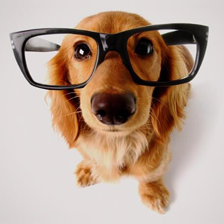 Perro con gafas listo para aprender