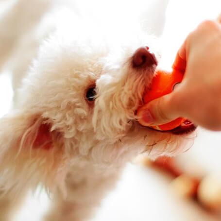 Persona quitando la bola del hocico del perro