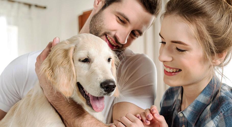 Criaderos de perros