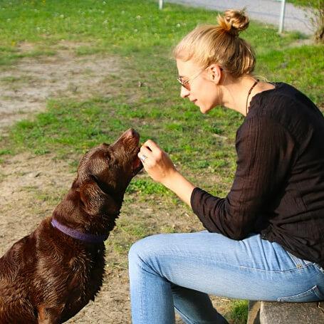 Ejercicios para que tu perro se aprenda su nombre