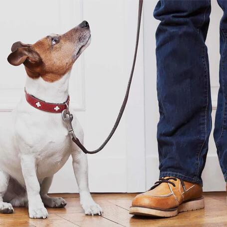 El dueño y el perro listos para entrenar