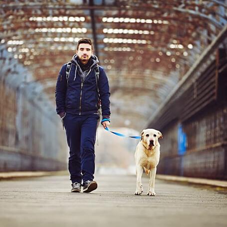 Dueño enseñándole a pasear a su perro