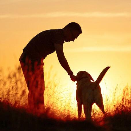 Enseñarle a tu perro su nombre
