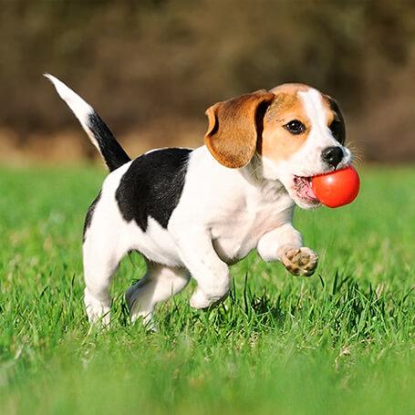 Un cachorro aprendiendo a traer la bola