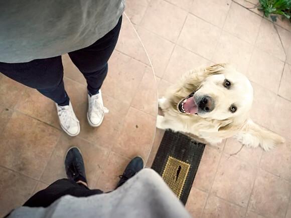 Un perro sentado esperando órdenes de sus dueños