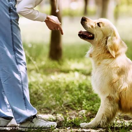 Aplicando la técnica de adiestramiento canino en positivo