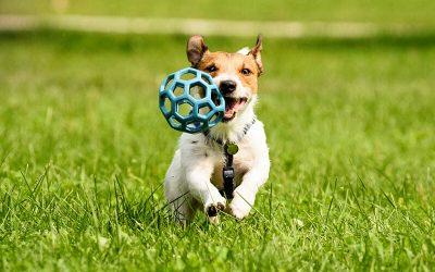 Comida, juguetes, anti mordeduras y esencias florales para perros