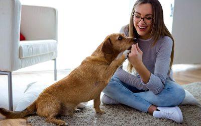 Cómo educar un perro (Video)