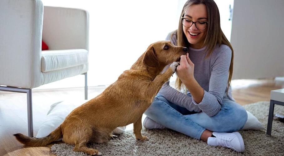 Cómo educar un perro