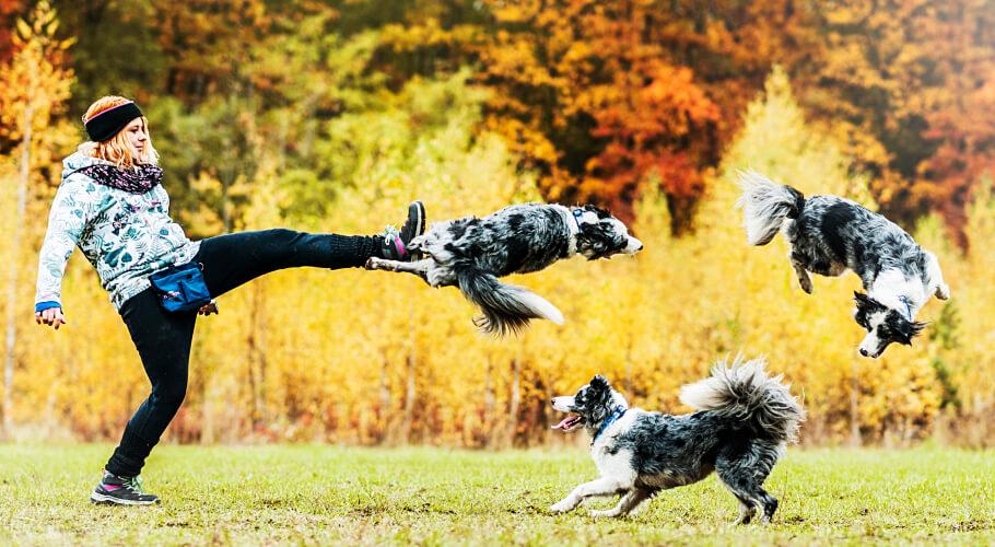 Lista de razas de perros más inteligentes