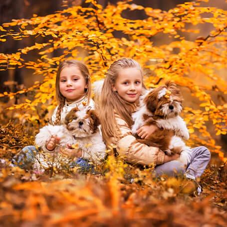 Fotografía profesional en exteriores de perros