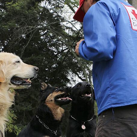 Cruz Roja Colombiana Centro Canino