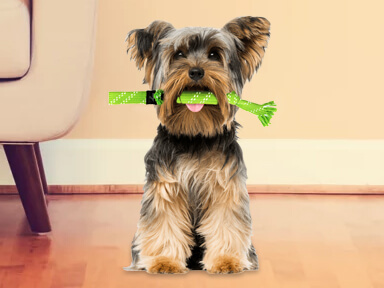 Mordedor para perro razas mini