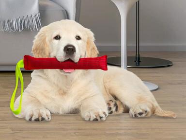 Mordedor para perro razas pequeñas y medianas
