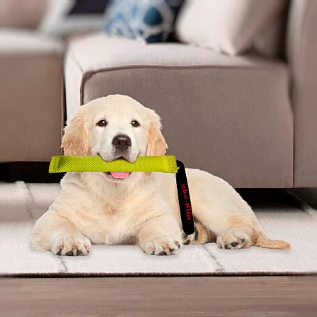Enseñarle al perro a soltar objetos con el mordedor