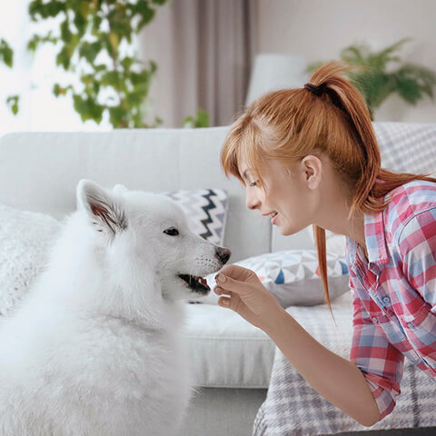 Adiestramiento canino para cachorros