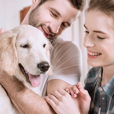 Educación canina para cachorros